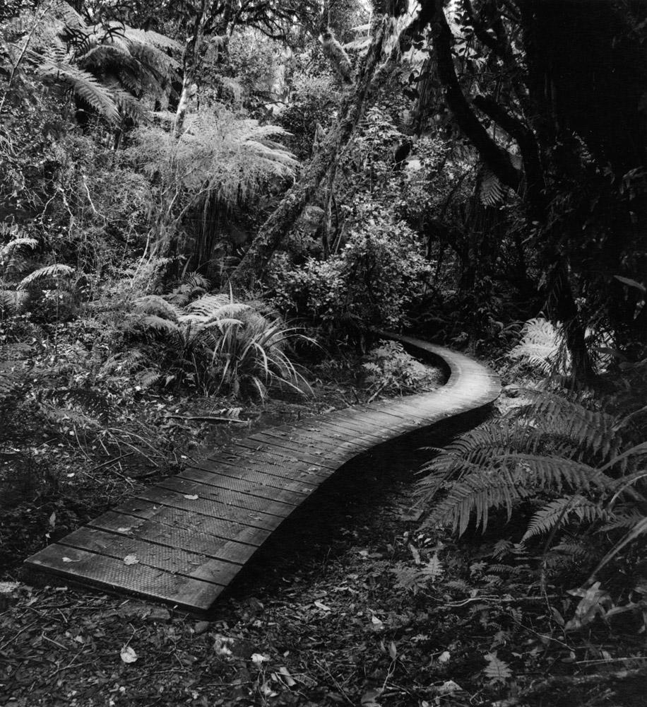 Walkway to the Beyond - New Zealand