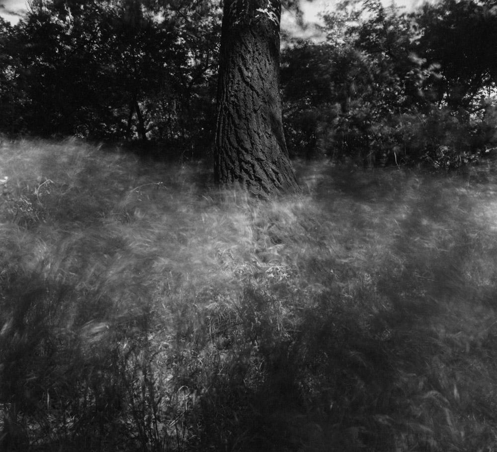 Windy Grass & Trees