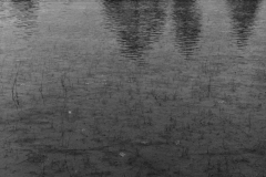Field Reflection - AZ